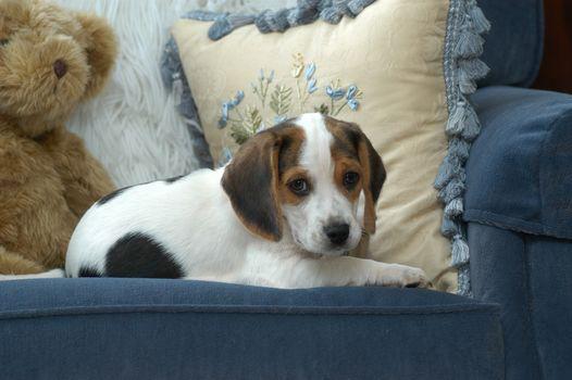 beagle, dog, puppy, baby, Teddy Bear, cushion, chair