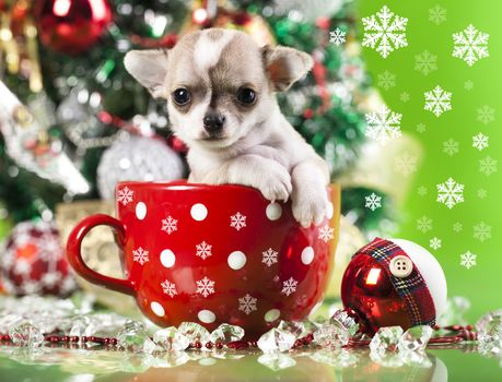 New Year, Chihuahua, dog, puppy, doggie, mug, Snowflakes, toy, ball, ornamentation