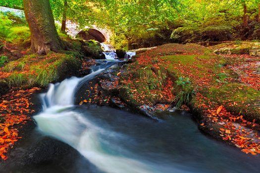autumn, rkchka, trees, bridge, nature