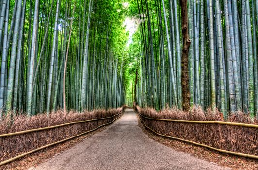 Bamboo Road, Bamboo Forest, road