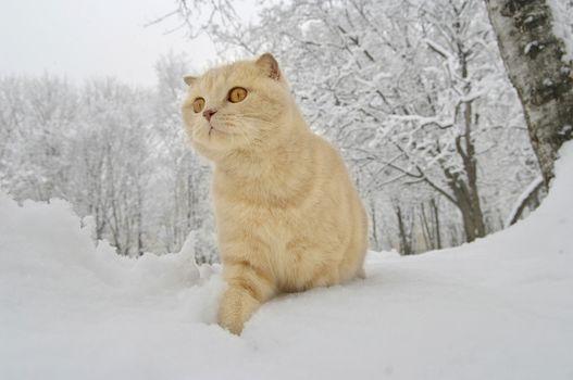 cat, winter, snow