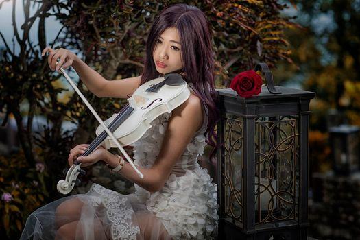 girl, Asian, violin, lantern, rose, mood