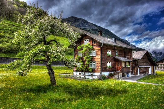field, home, tree, Mountains, Switzerland, landscape