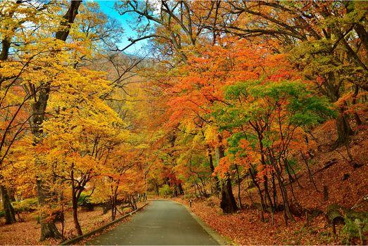 autumn, park, road, trees, landscape