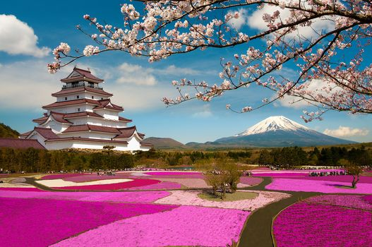 Mount Fuji, Located on the island of Honshu, the highest mountain in Japan, phlox Festival