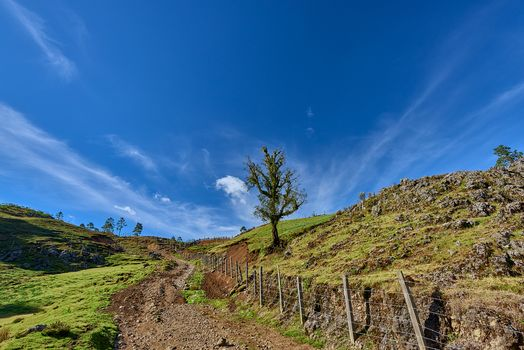 Tree and Road, Guatemala, Hills, trees, landscape