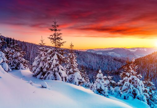 sunset, winter, Mountains, trees, spruce, drifts, snow, landscape