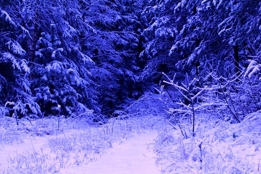 winter, forest, snow, trees, nature