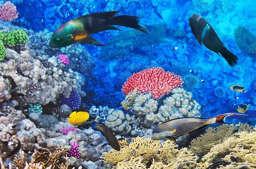 sea, seabed, fish, nature