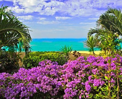 sea, shore, Flowers, Palms, landscape