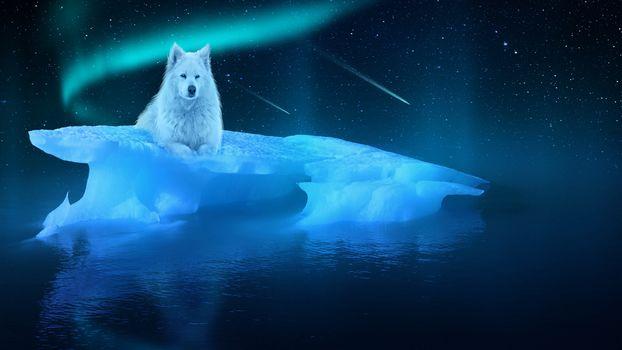 night, ice floe, white wolf