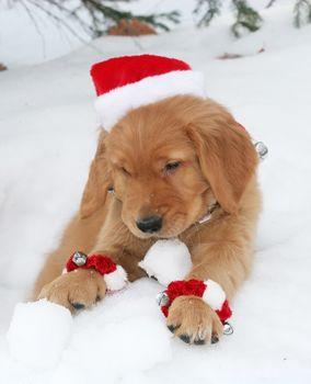 dog, Dog, animals, puppy, Puppies, winter, santa, cap