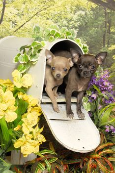 dog, Dog, Puppies, puppy, Friends, Almost there, Flowers