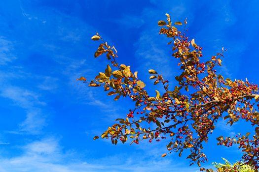 sky, branch, piroda