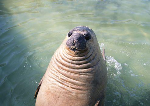 fur seal, animals, Antarctica, bathing