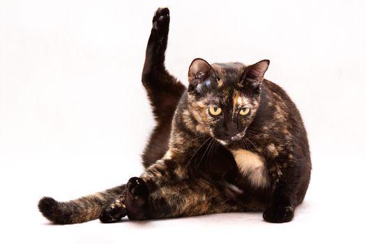 COTE, cat, cat, background
