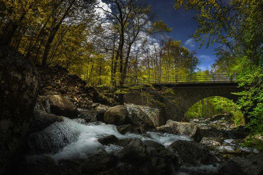 waterfall, trees, bridge, stones