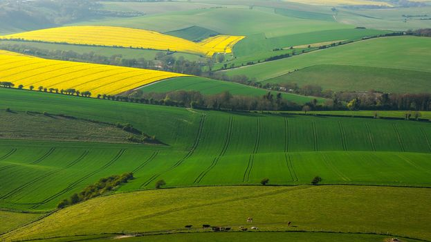 field, SPRING, view from the top, landscape