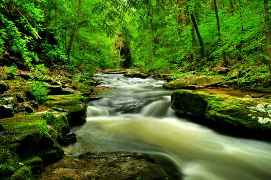 forest, river, waterfall, Rocks, landscape