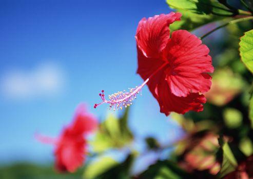 цветы, цветок, экзотика, красный