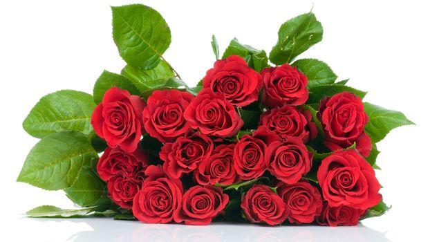 rosa, Roses, flor, Flores, rojo, COMPOSICIÓN, ramo, fondo blanco