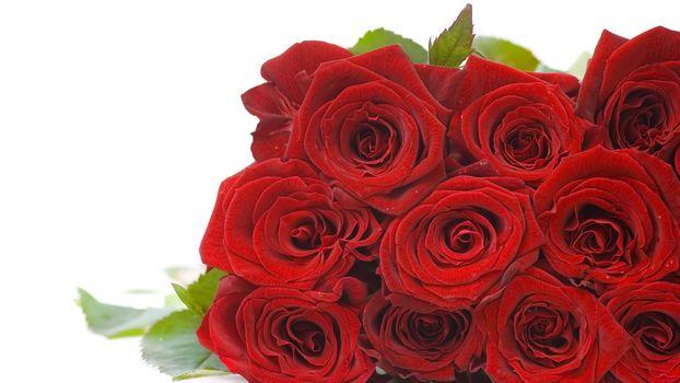 rosa, Roses, flor, Flores, rojo, COMPOSICIÓN, ramo, fondo blanco, para las felicitaciones