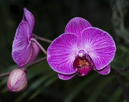 orchid, flower, flora