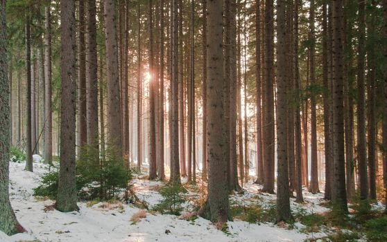 forest, trees, nature, winter, snow