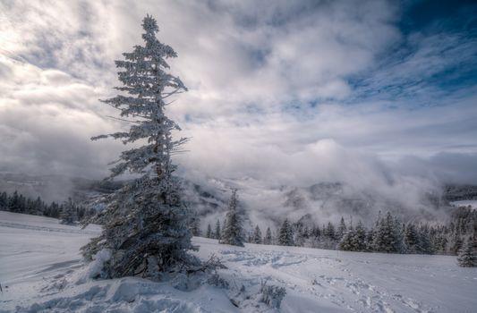 winter, Mountains, snow, drifts, trees, landscape