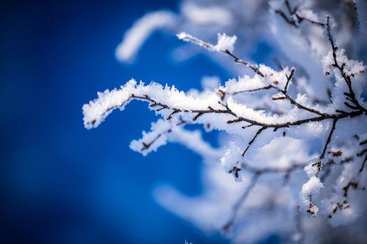 winter, branch, snow, frost
