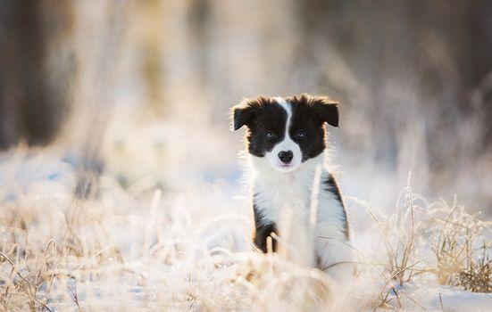 puppy, dog, view, winter