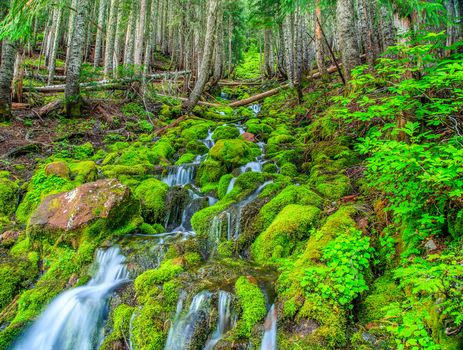 forest, trees, small river, waterfall, moss, nature