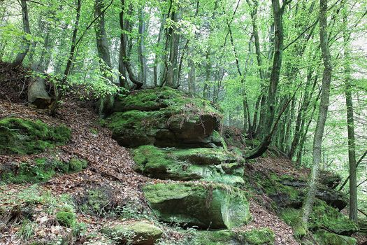 forest, trees, stones, nature