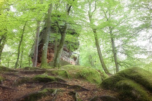 forest, trees, Rocks, nature