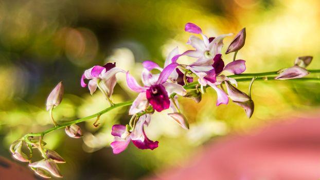 Flowers, flower, ORCHIDS, Macro