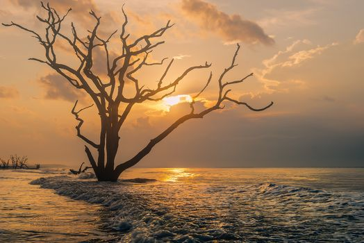 Basin, South Carolina, sunset, sea, tree, landscape