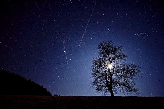 night, field, tree, landscape