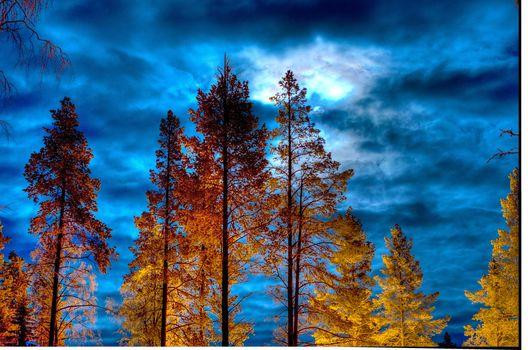 sunset, sky, trees, nature