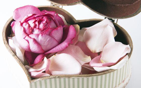 Personas by Kisenok, Valentine, Valentine's Day, holiday, heart, rose, Petals, capsule