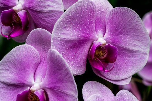 kwiat, Kwiaty, flora, orchidea