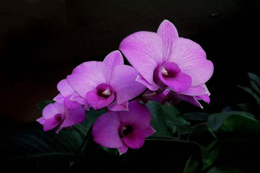 flower, Flowers, flora, orchid