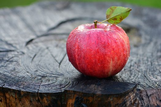 apple, STUMP, Macro
