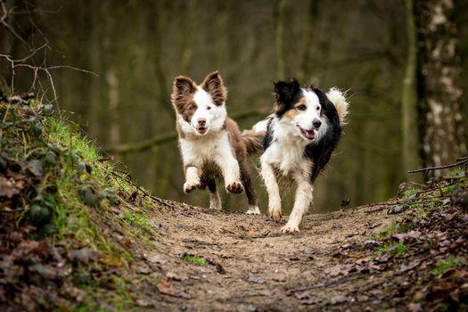 Kisenok рулит, ввести тег в поиск сайта, собака, собаки, щенок, щенки, животные