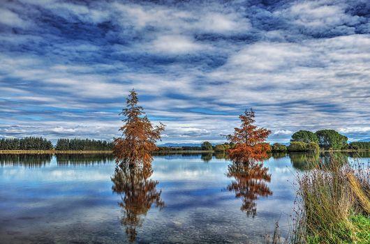 Bells, pond, trees, Tawai, Canterbury, New Zealand