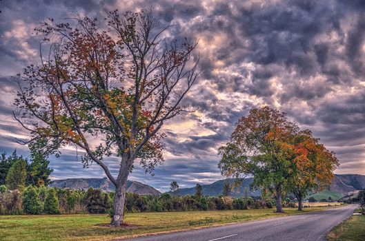autumn, Clouds, trees, Waimate, Canterbury, New Zealand