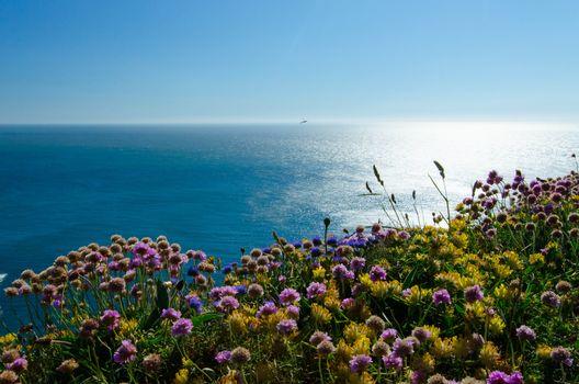 Puffin Island, Wales, England, Irish Sea, Wales, England, Irish sea, sea, coast, flowers