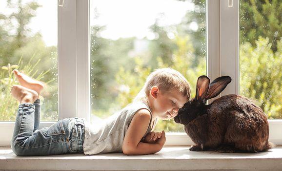 boy, rabbit, friends, friendship, love, window, on the windowsill, mood