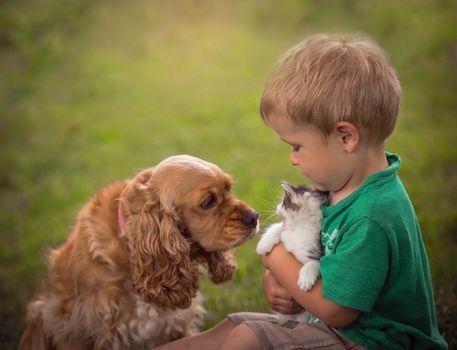 boy, dog, kitten, friends, friendship