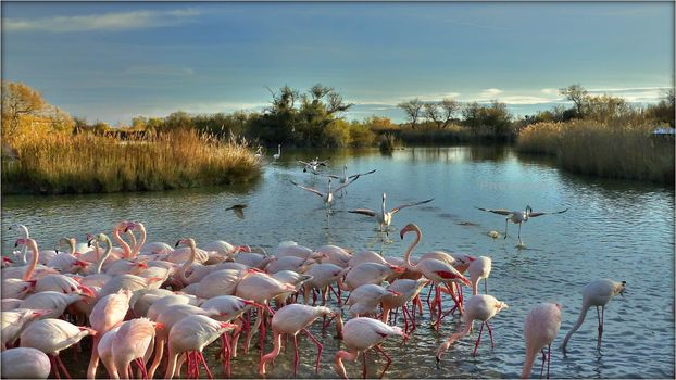 River, trees, nature, pink flamingos