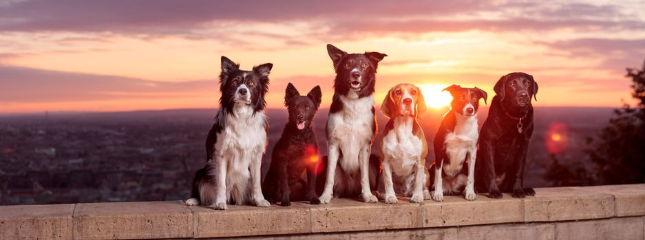 dogs, friends, border-collie, bigli, Labrador retriever, dawn, sunrise, railing, view